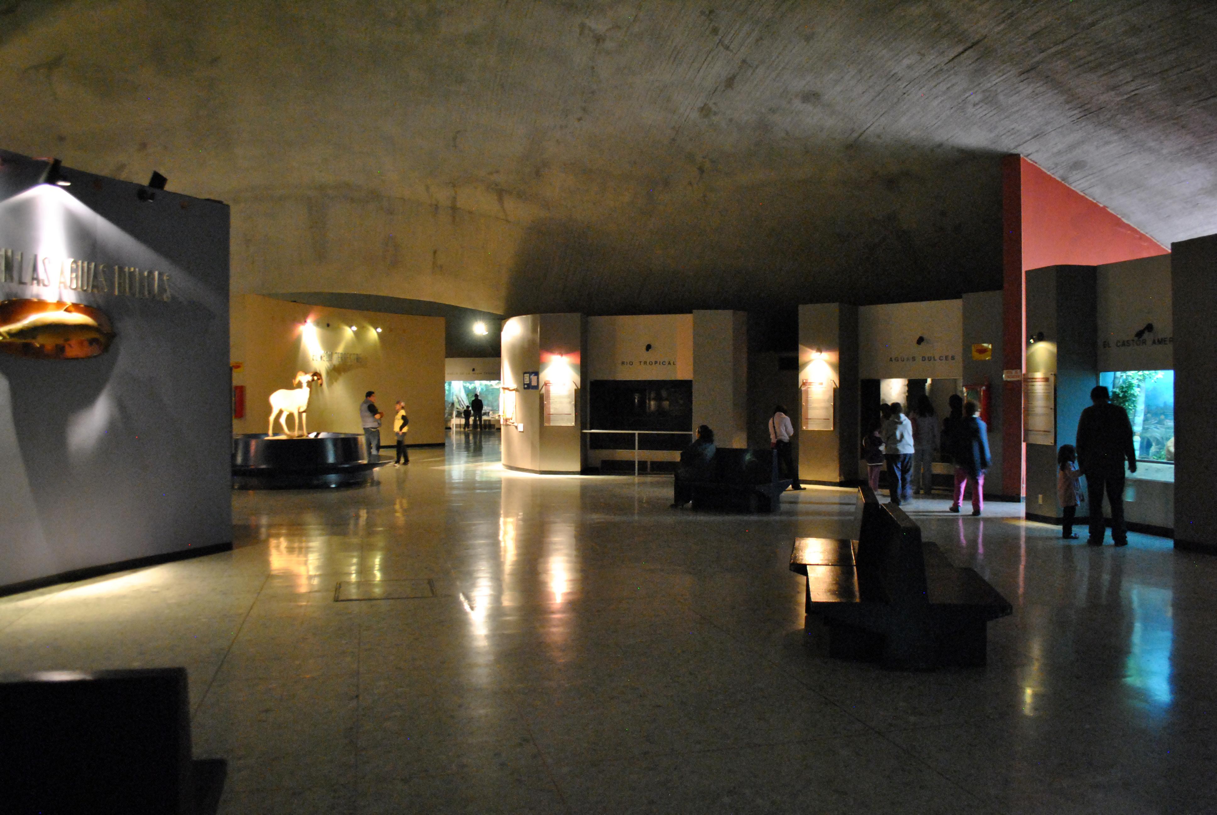 historia museo: