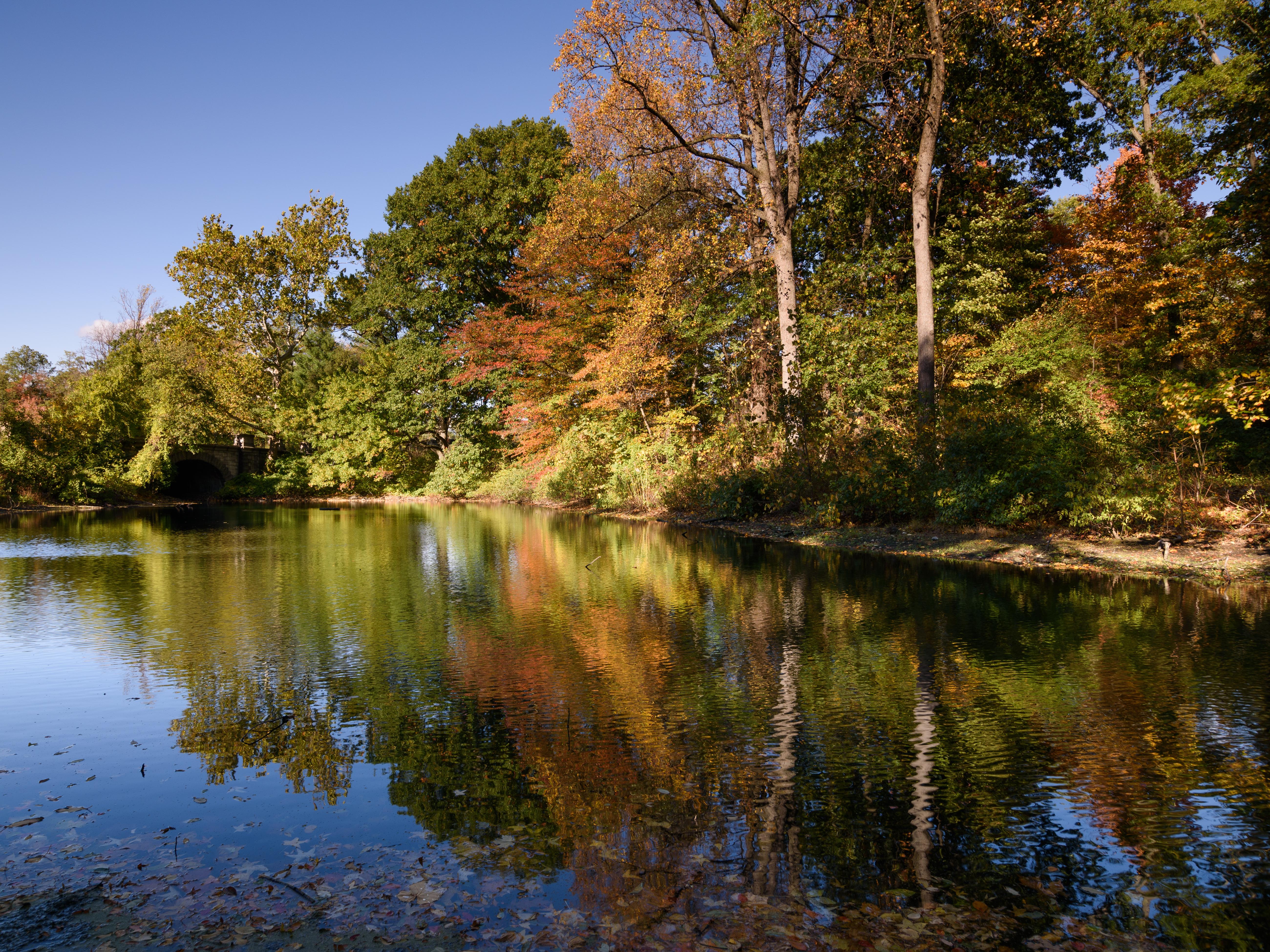 File:New York Botanical Garden October 2016 007.jpg - Wikimedia Commons
