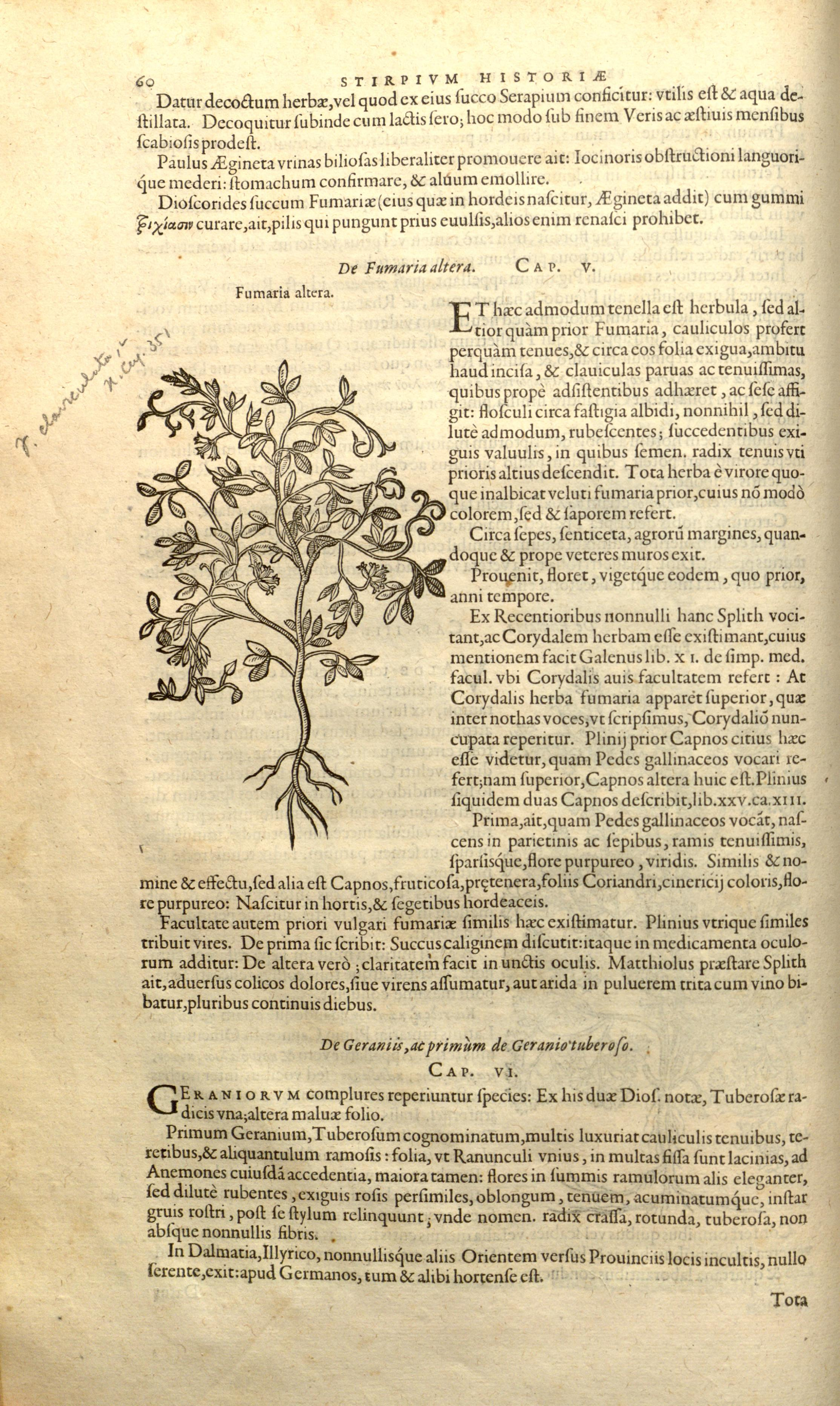 historiae pemptades sex, sive libri XXX (Page 60) BHL8099721.jpg Remberti Dodonaei ... Stirpium historiae pemptades sex, sive libri XXX. Date 1583 Source