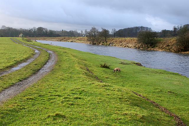 River Ribble - geograph.org.uk - 881711