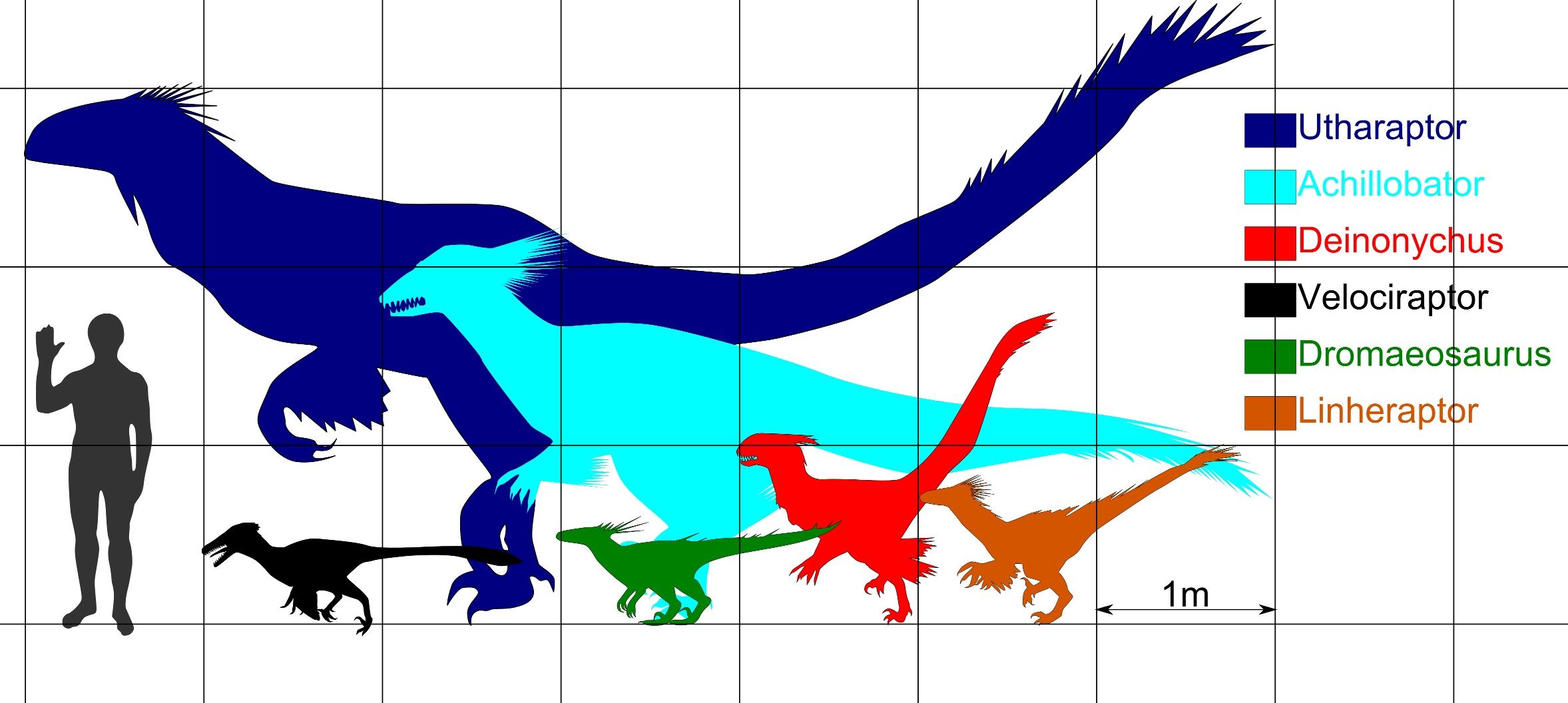 File:Sizecomp dromaeosaurs.jpg