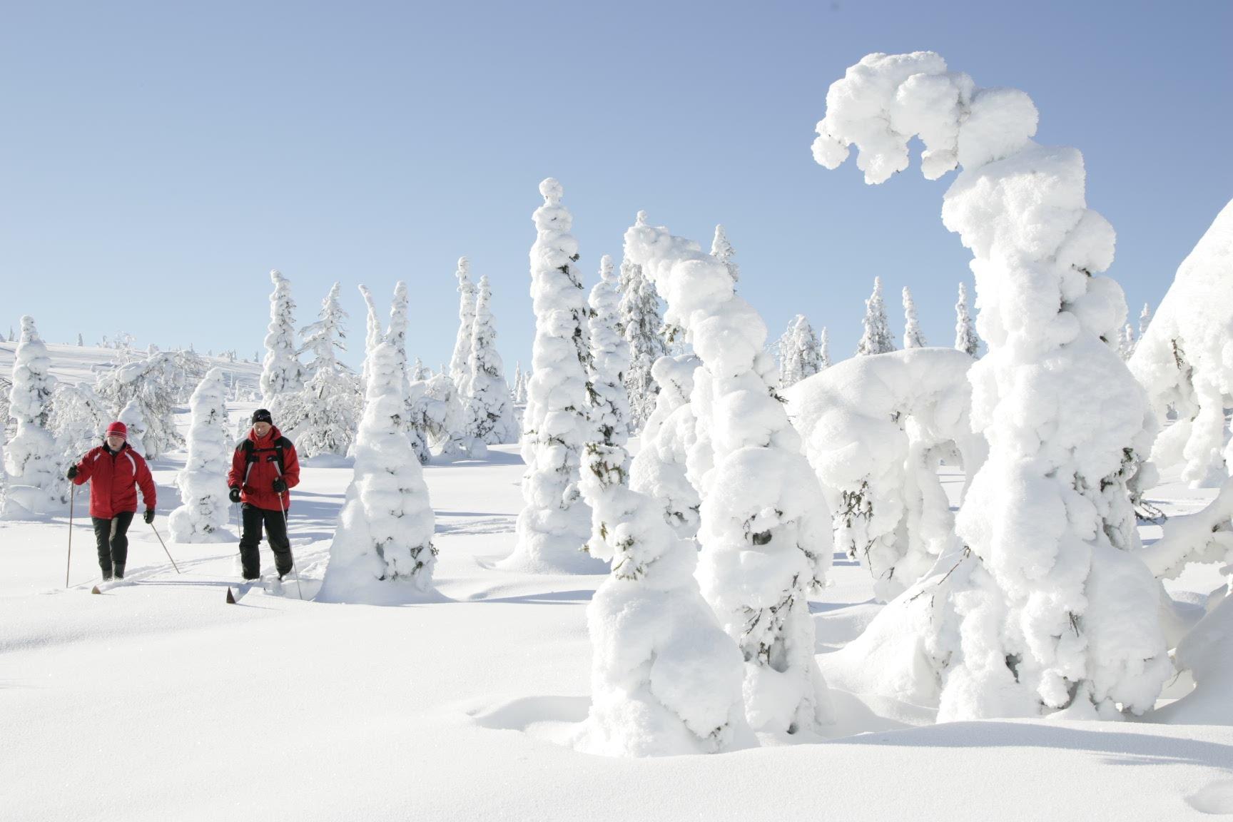 https://upload.wikimedia.org/wikipedia/commons/2/23/Skiing_at_Riisitunturi_National_Park.JPG