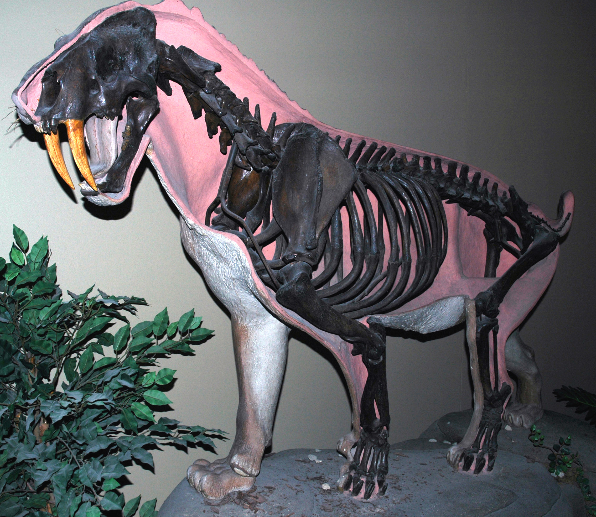 Southern California Museum Of Natural History