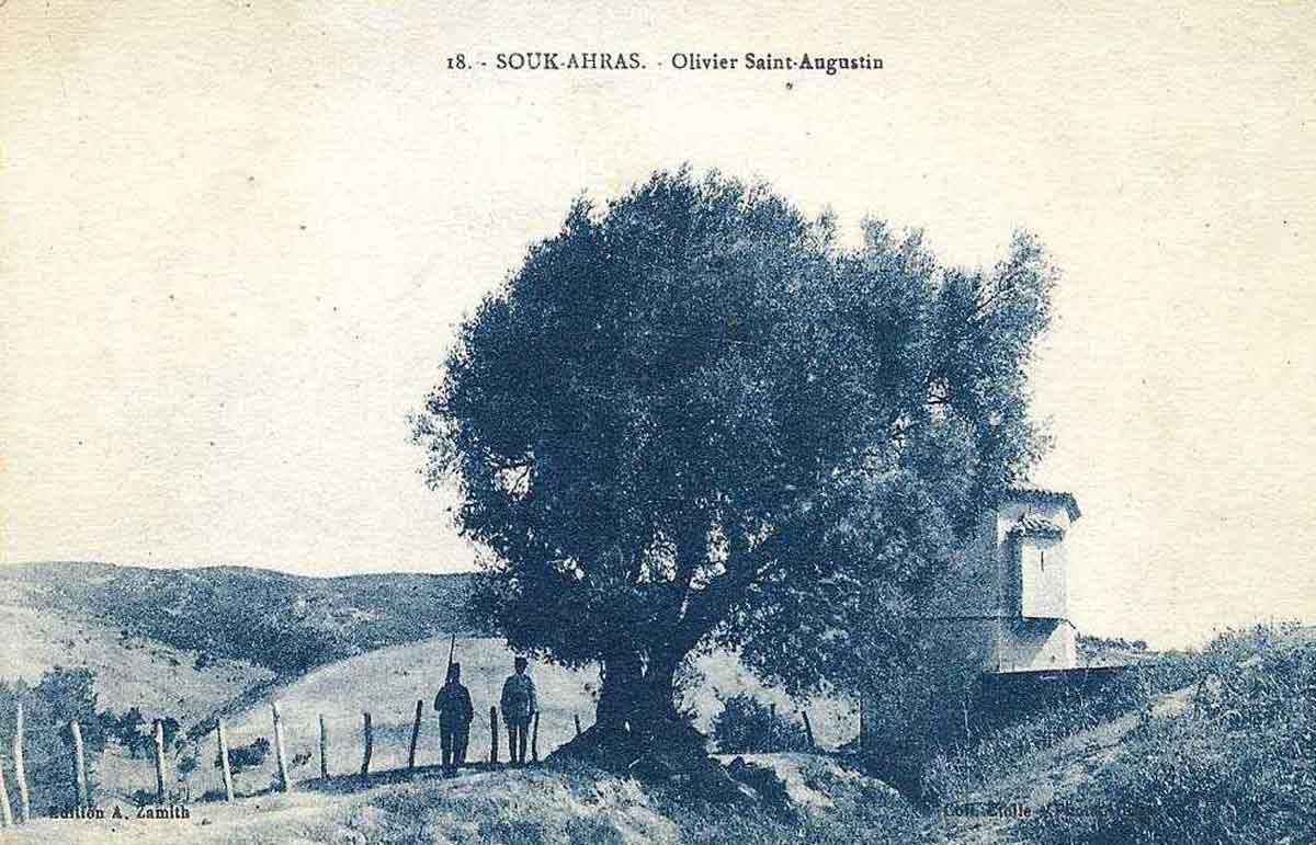 An olive tree that is believed to have been planted by Saint Augustine in Thagaste.