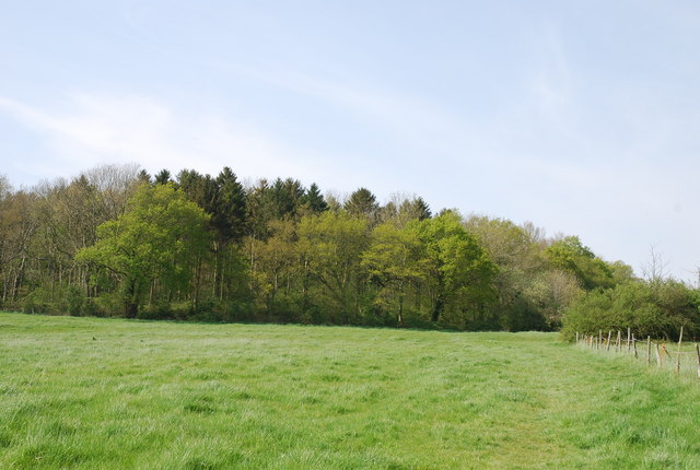 Southeast corner of Duncliffe Wood - geograph.org.uk - 408852