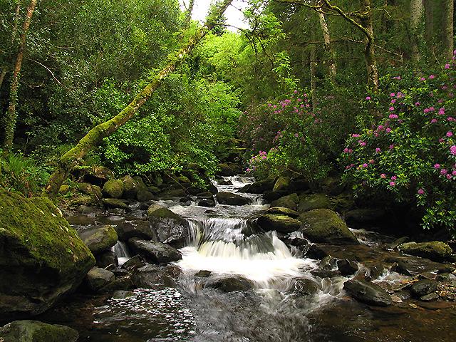 Torc_Waterfall_at_Killarney_National_Park2.jpg