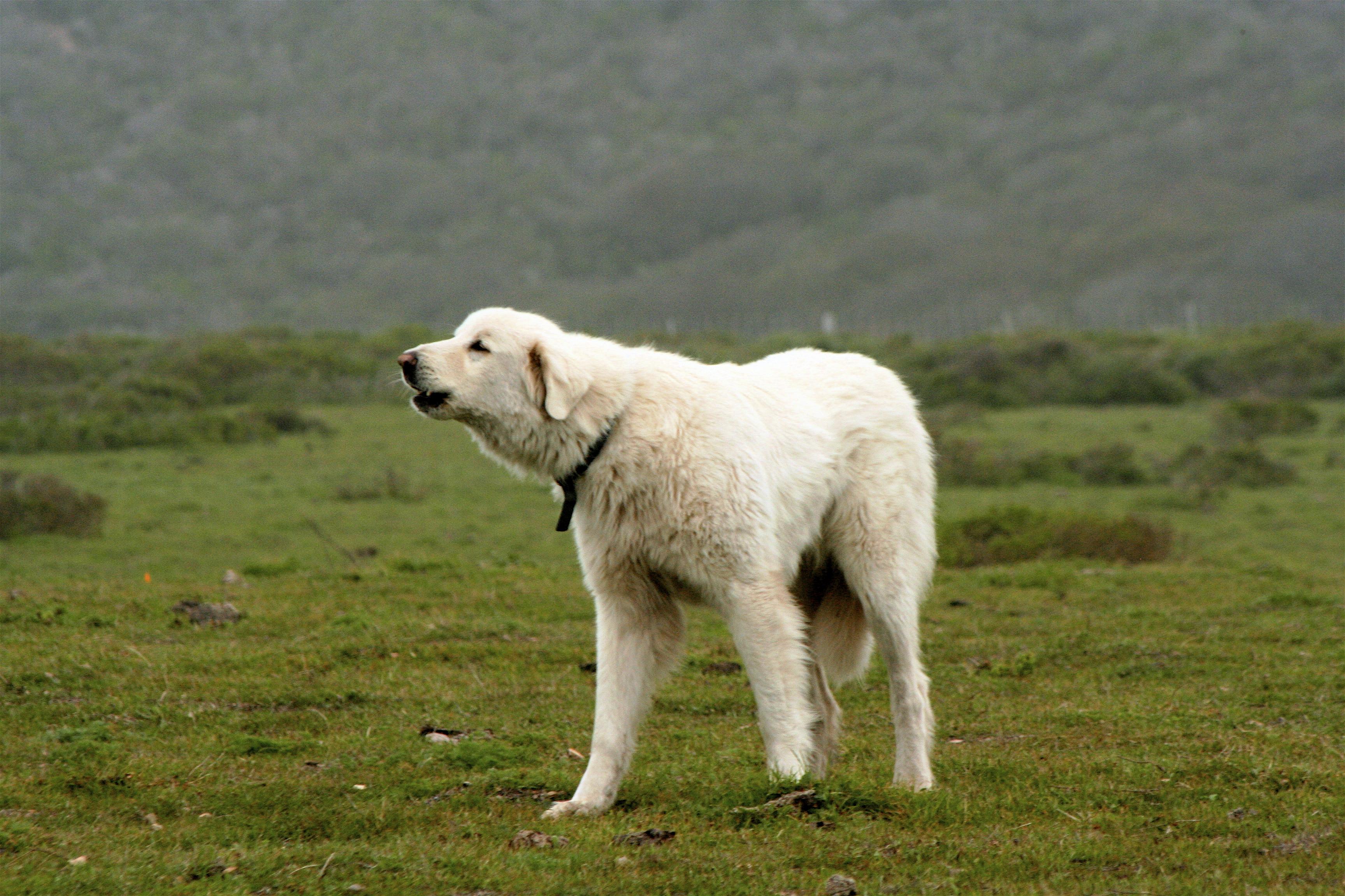 K Guard Dog Training Lockport Il