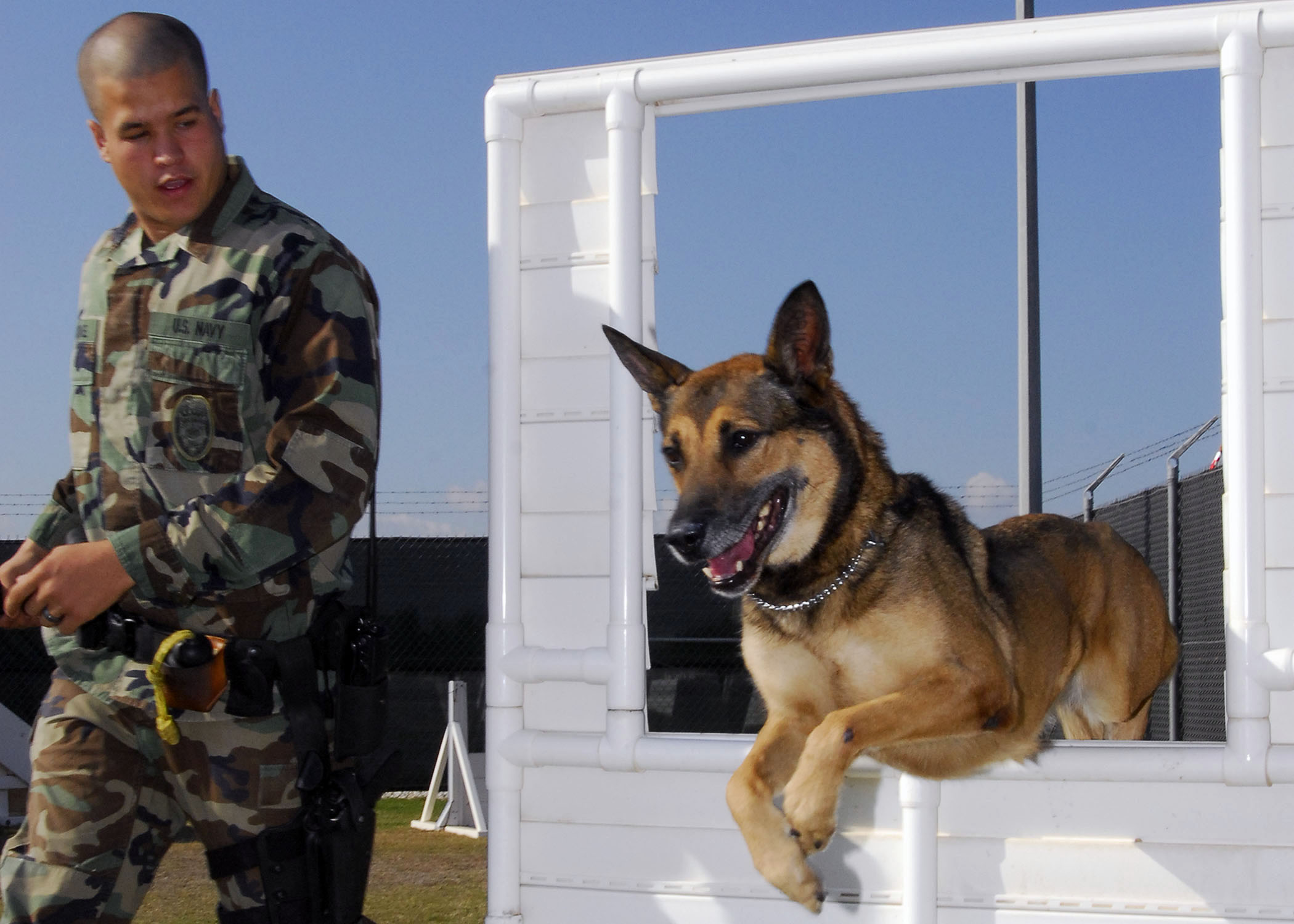 File:US Navy 081112-N-0780F-002 Military working dog Laika jumps ...