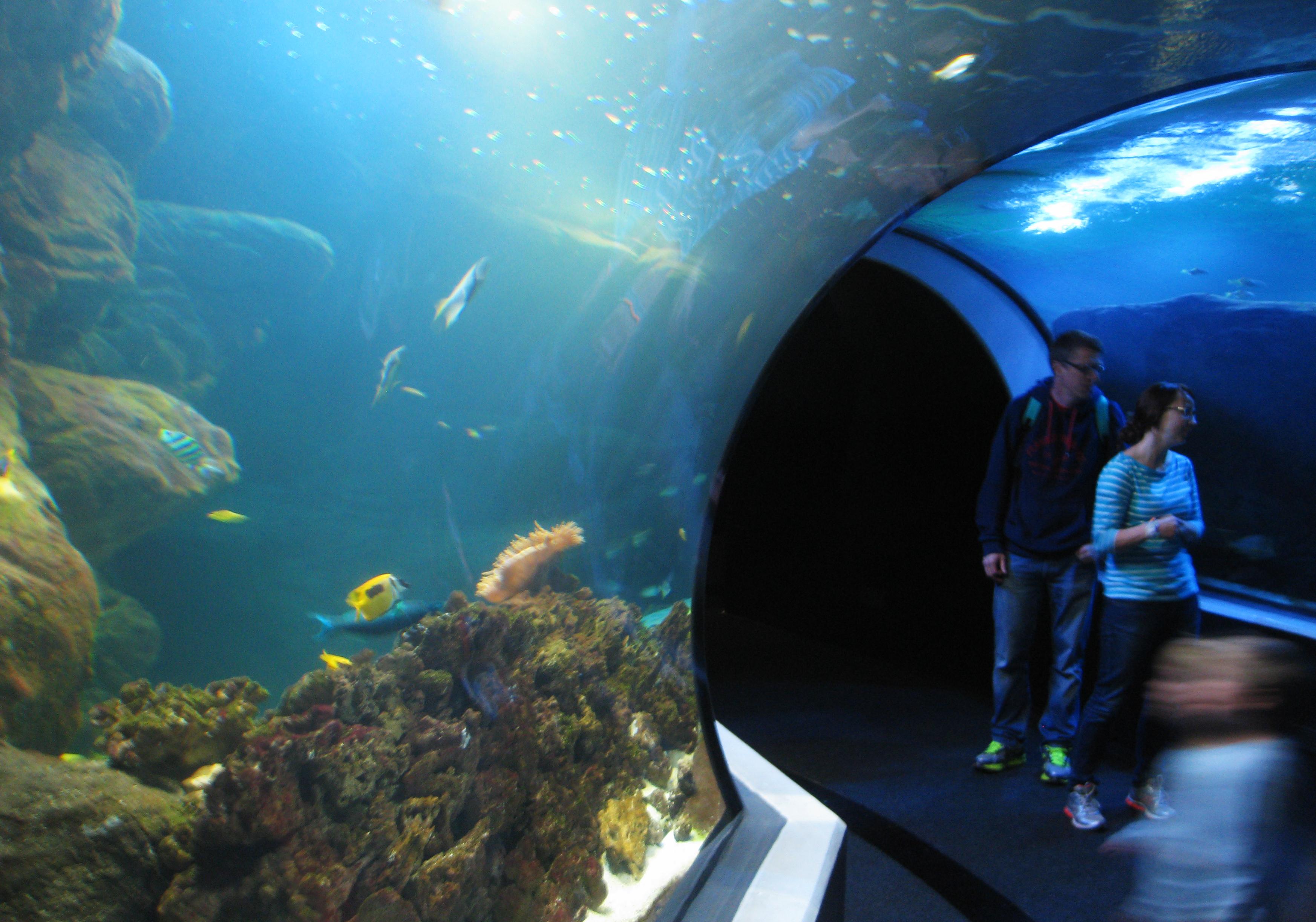 Description Universeum underwater tunnel.jpg