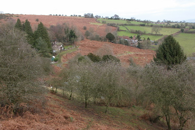 White Rocks, Garway Hill - geograph.org.uk - 101848