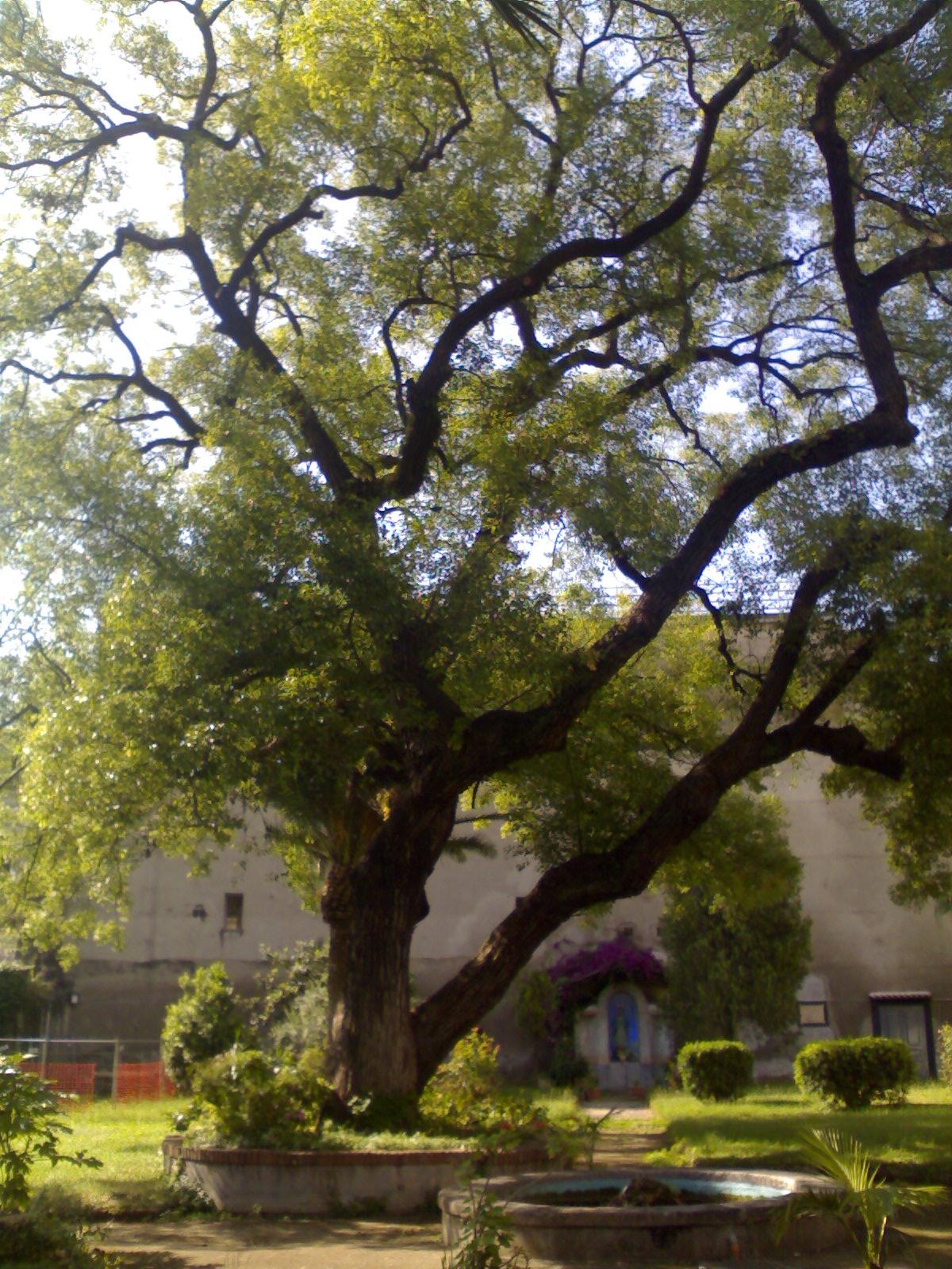 Descrizione albero incurabili