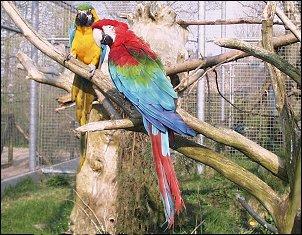 odense zoo kort dildo video