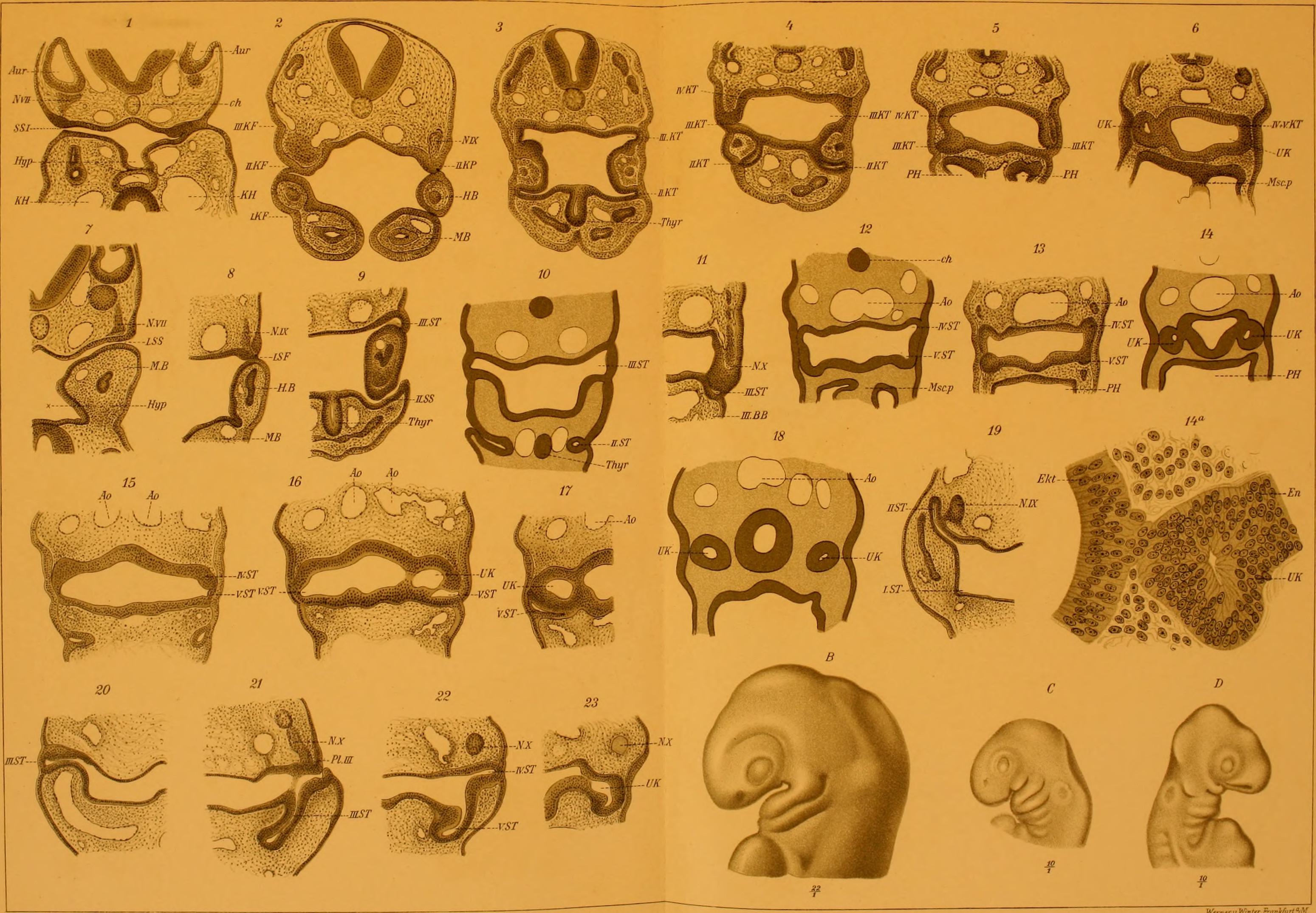 File:Archiv für mikroskopische Anatomie (1915-1916) (20321803382 ...