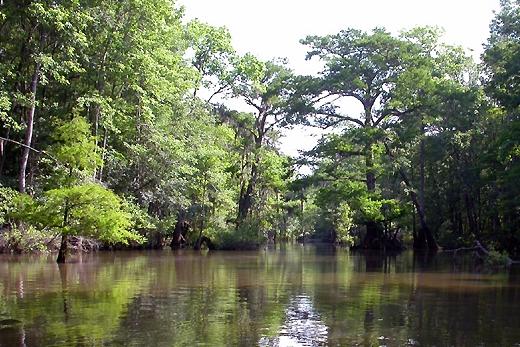 Mobile tensaw river delta wikipedia for Mobil wikipedia