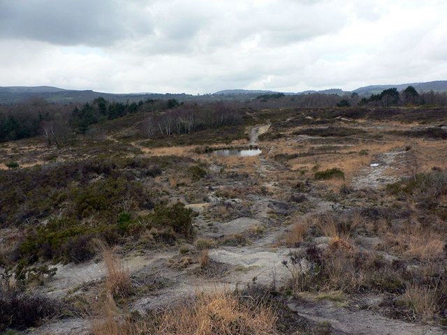 Lowland heath