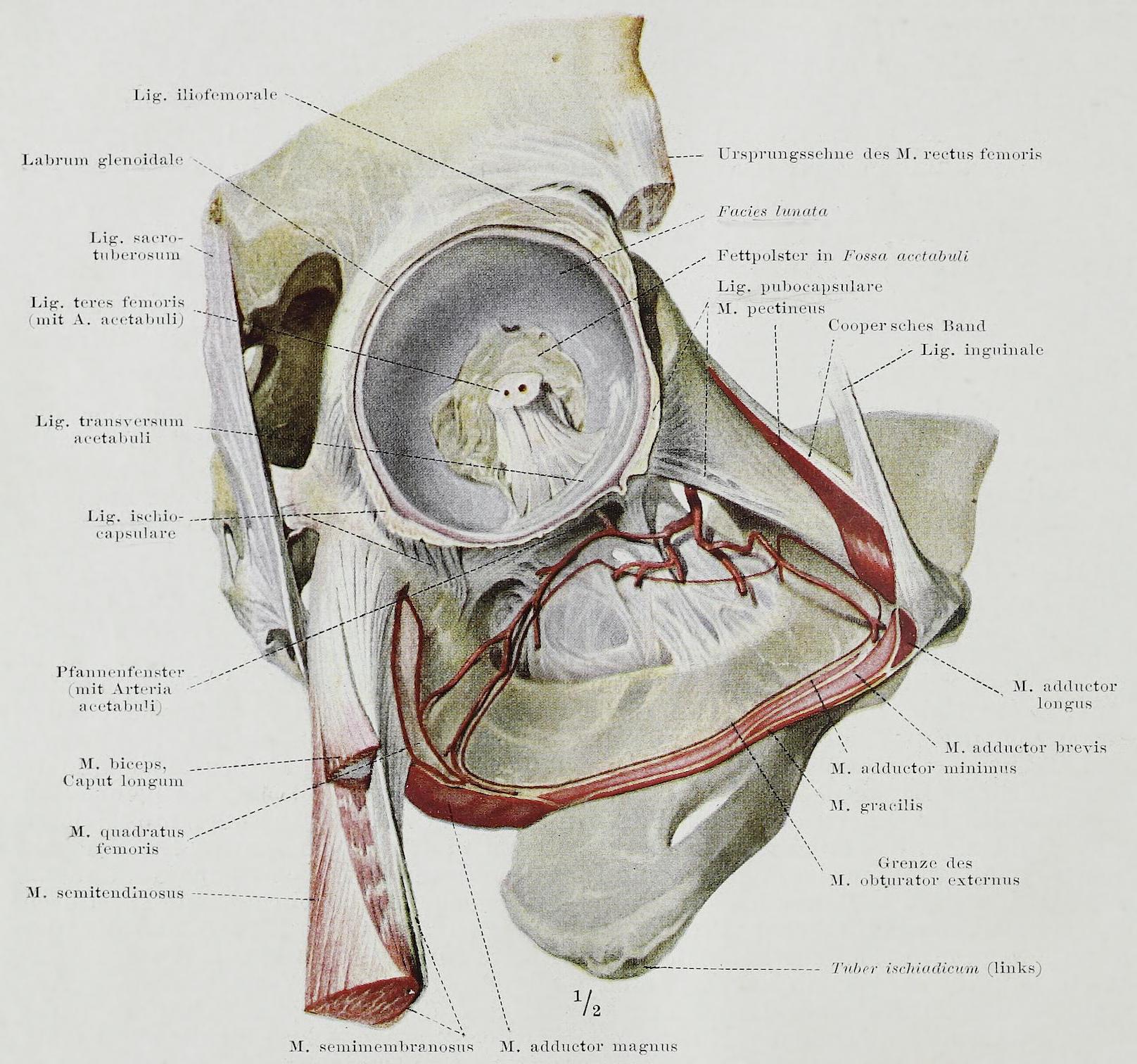 Charmant Michigan State Anatomie Ideen - Anatomie Ideen - finotti.info
