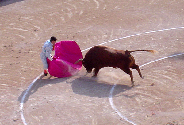 Fil:Bull attacks matador.jpg