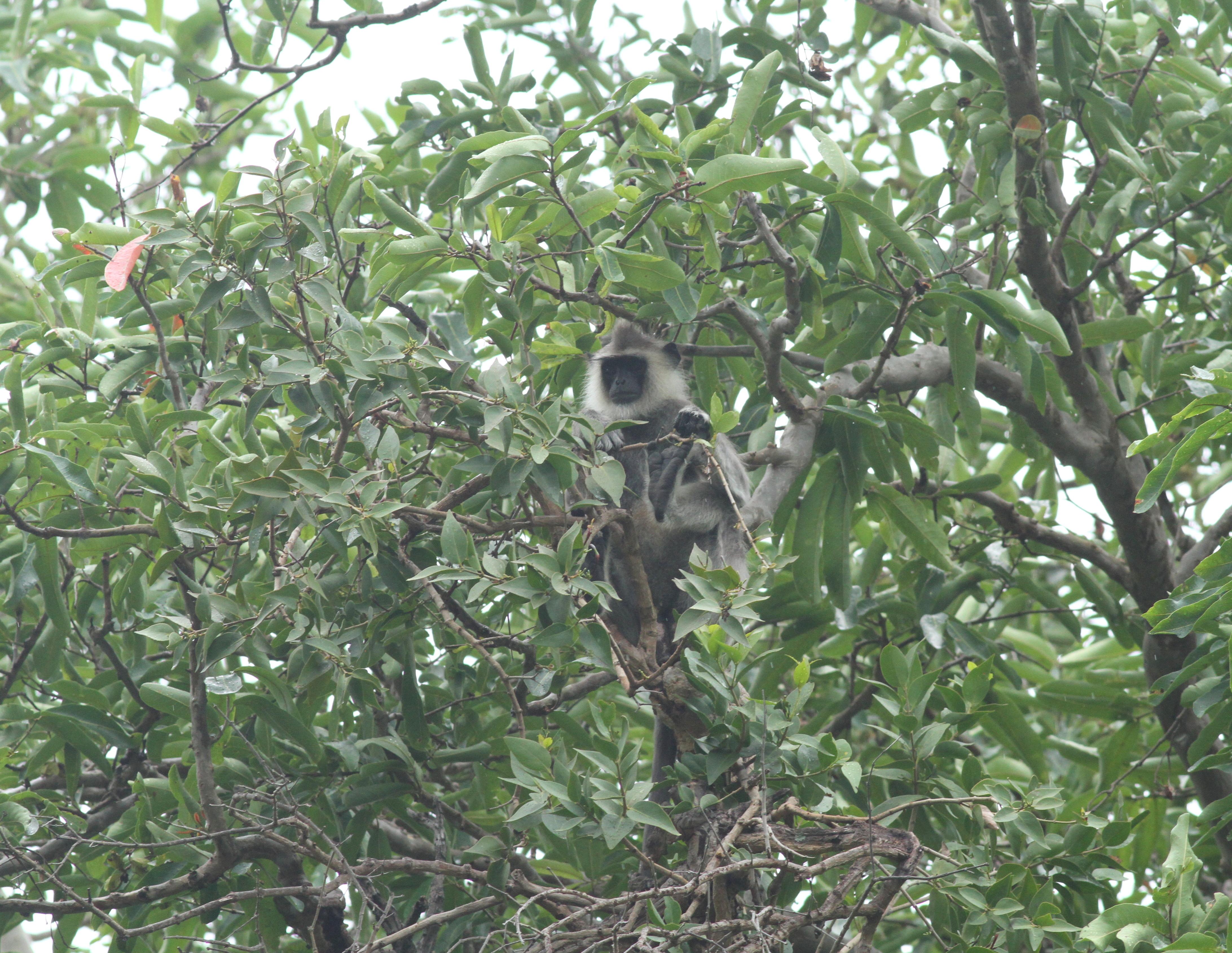 File:Chinnar Wildlife Sanctuary IMG 9072 (31) JPG
