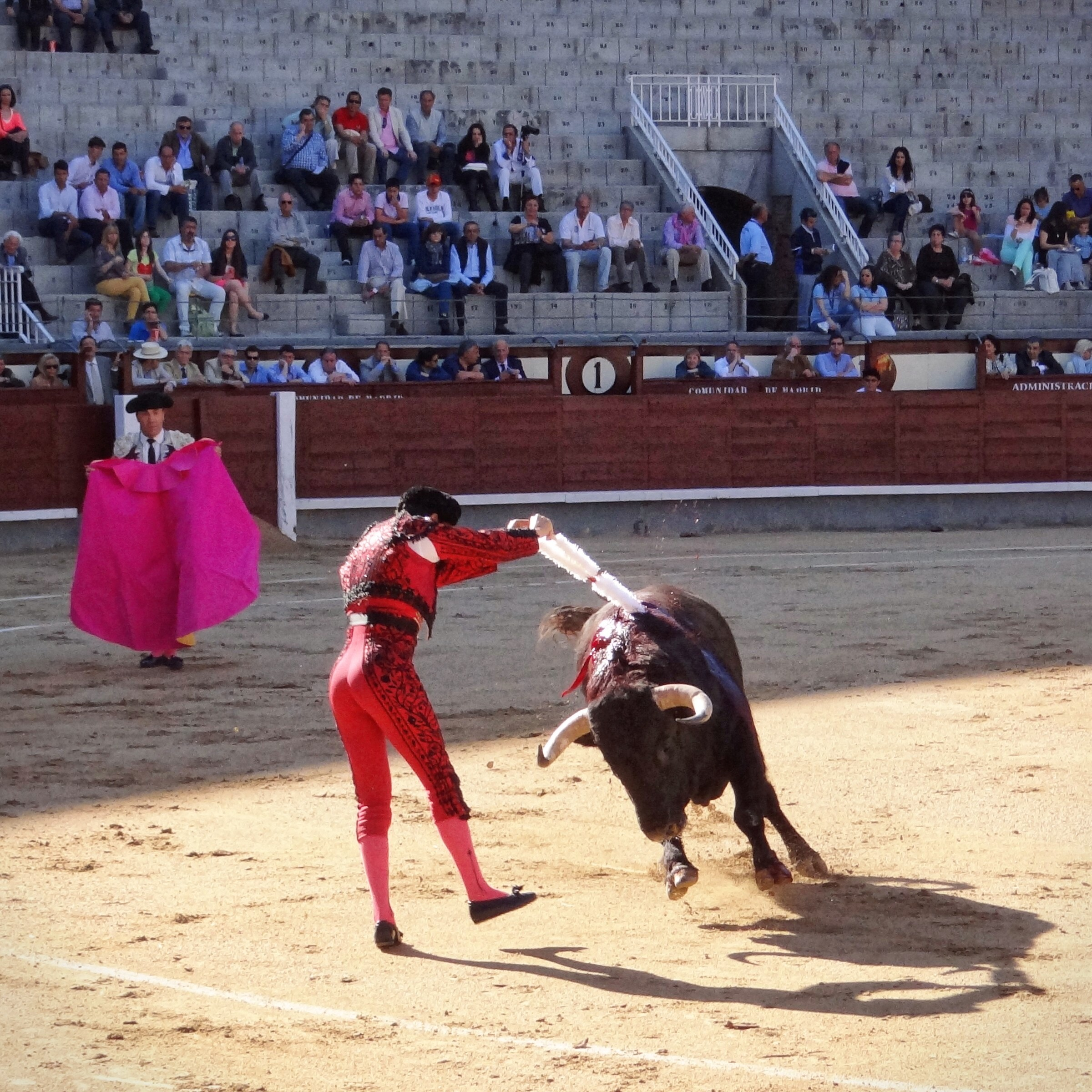 spanish style bullfighting