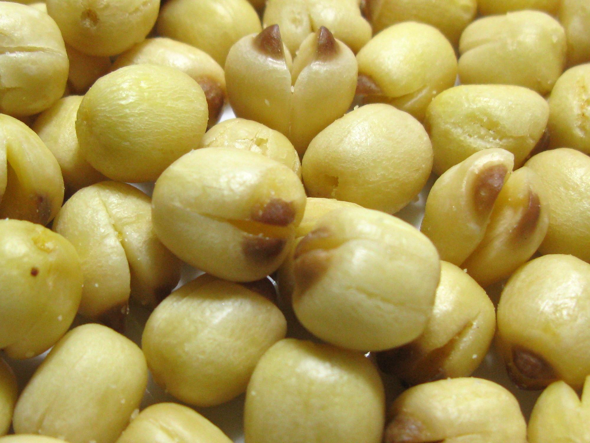 File Dried Lotus Seeds Jpg Wikimedia Commons