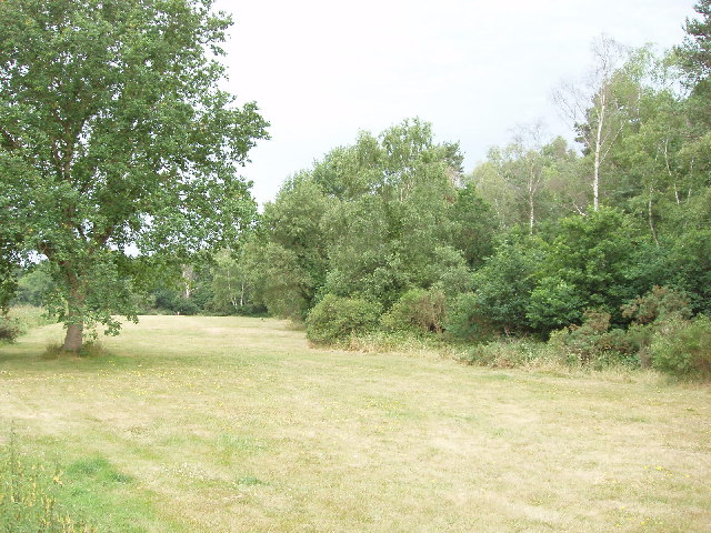 East Burnham Common in Burnham Beeches - geograph.org.uk - 21294
