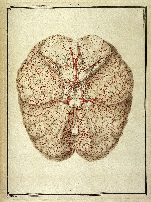 Nett Anatomie Und Physiologie Wörterbuch Kostenloser Download Ideen ...