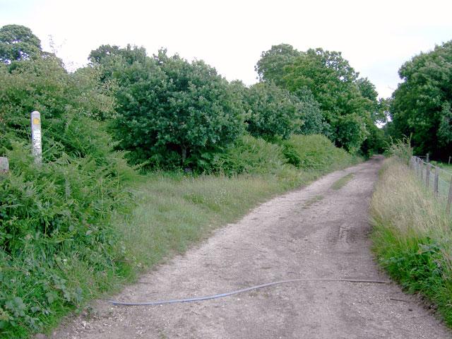 Grub Ride, Clapham Wood - geograph.org.uk - 870413