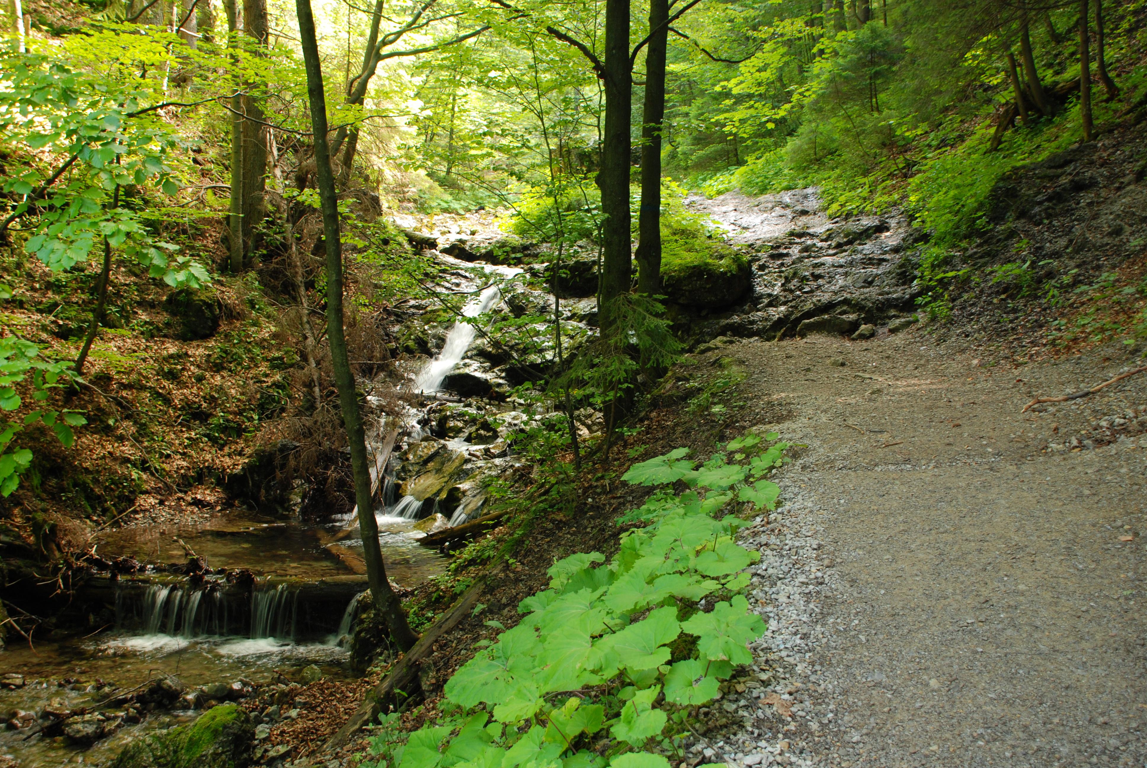 Dolina za Bramką, fot. Hubert Wagula, źródło: Wikimedia, GNU