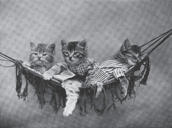 File:Harry Whittier Frees - Resting in the Hammock.jpg