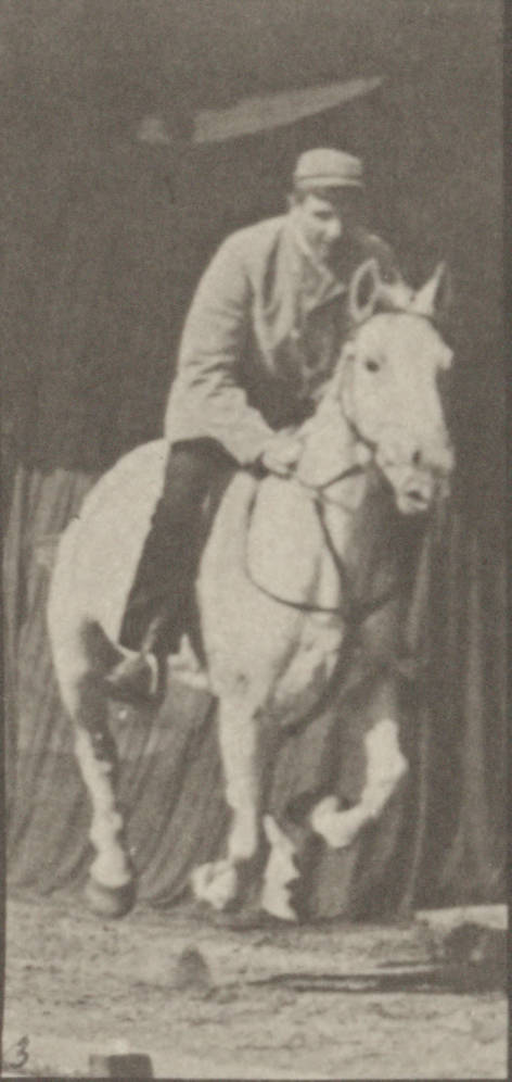 Horse Pandora galloping, saddled with rider (rbm-QP301M8-1887-635a~3).jpg English: Horse Pandora galloping, saddled with rider Horse Pandora galloping
