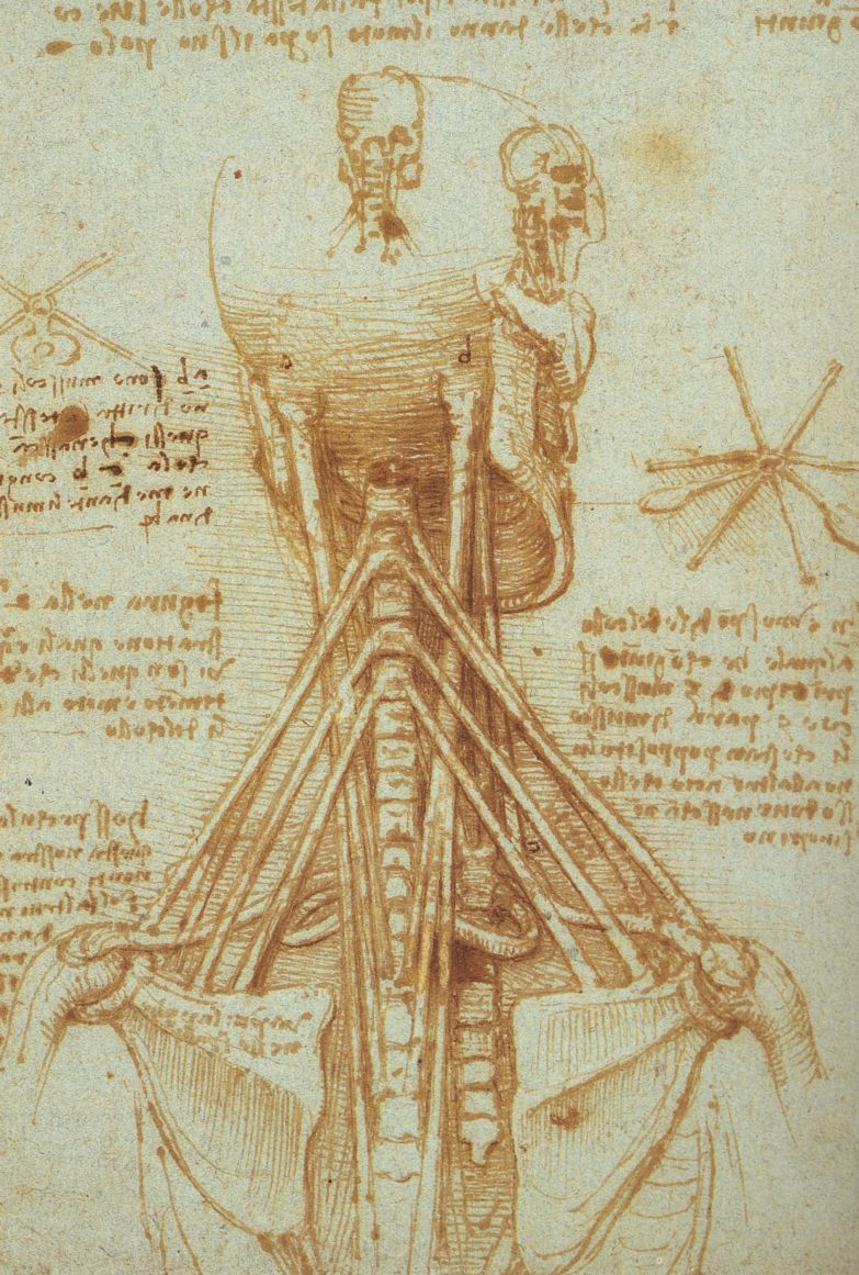 File:Leonardo Anatomy of the Neck, c. 1515.jpg - Wikimedia Commons