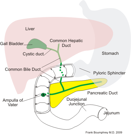 Pancrease biliary1.png