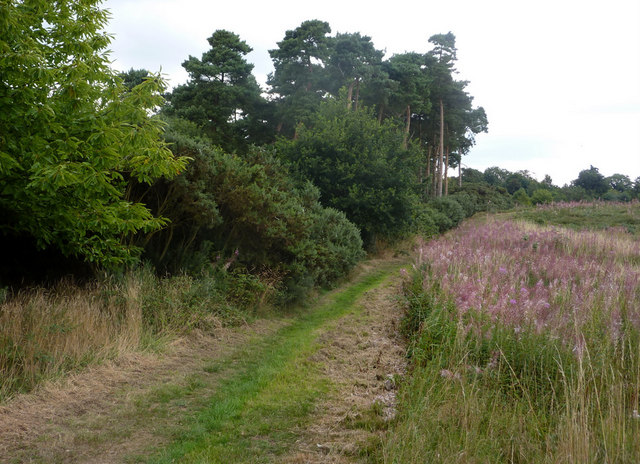Path in Cliff Plantation - geograph.org.uk - 1432828