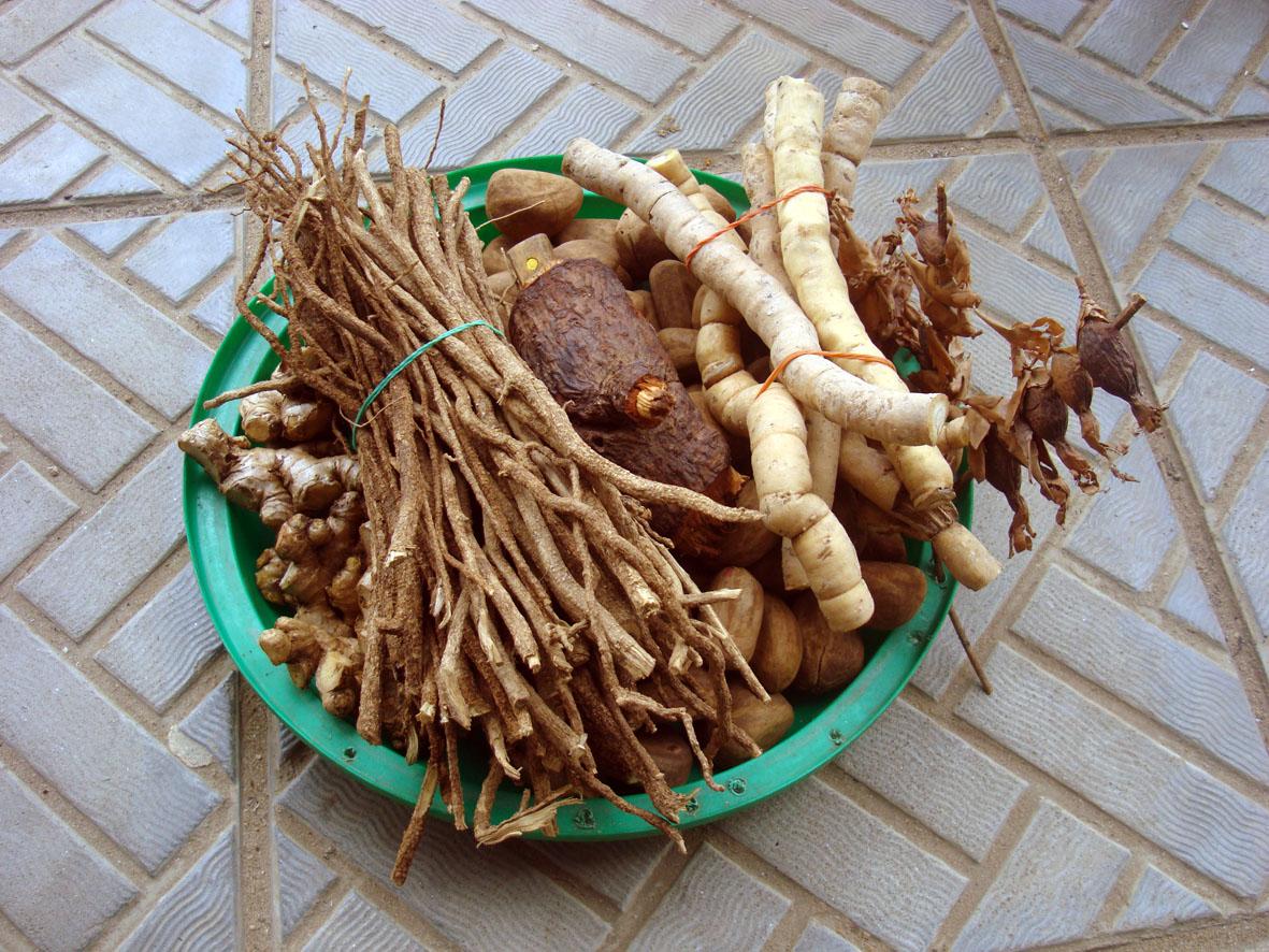planta yohimbe