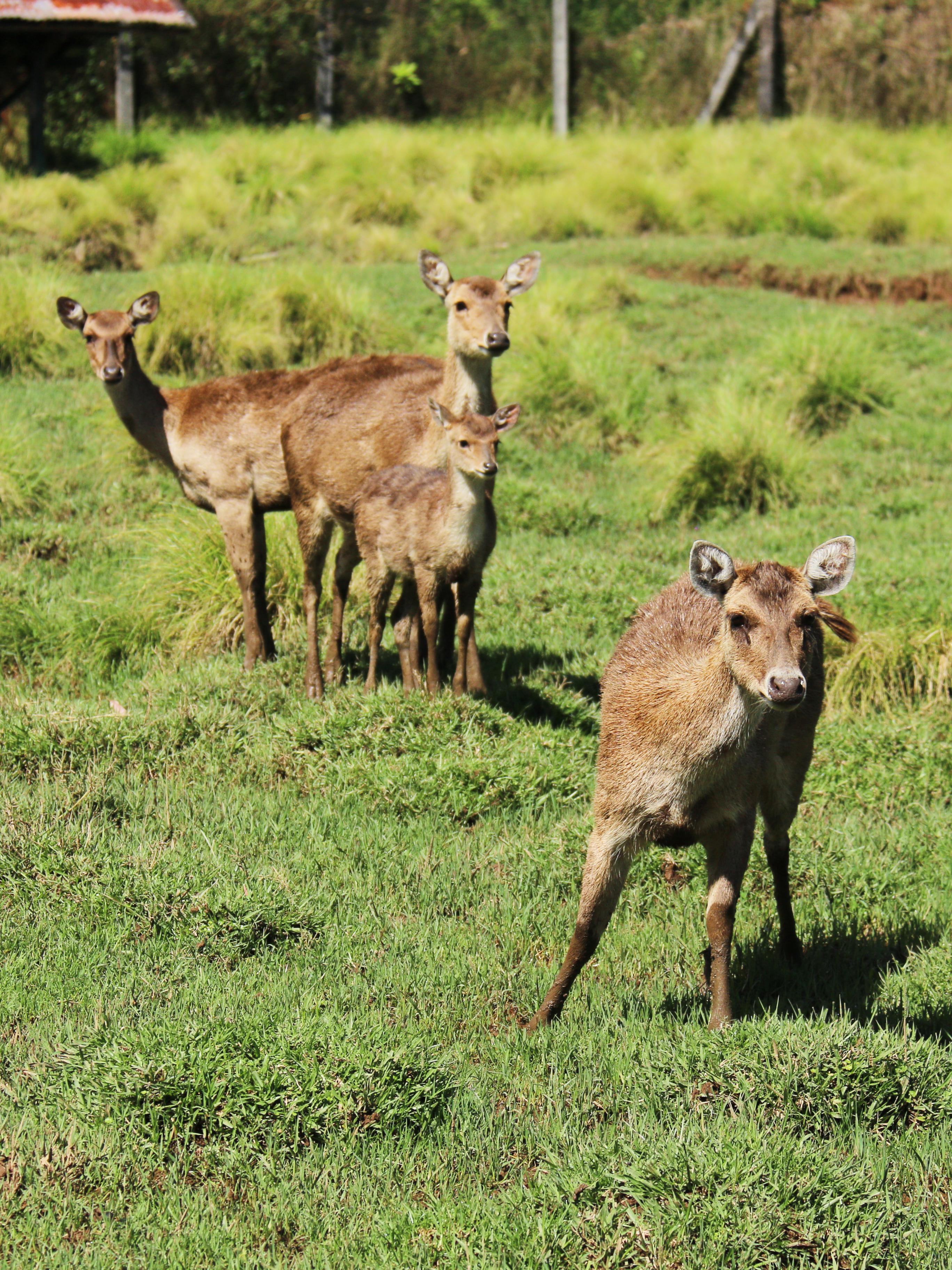 Statiunea Ranca – 7 oferte de cazare sub 150 de lei pe noapte  |Ranca