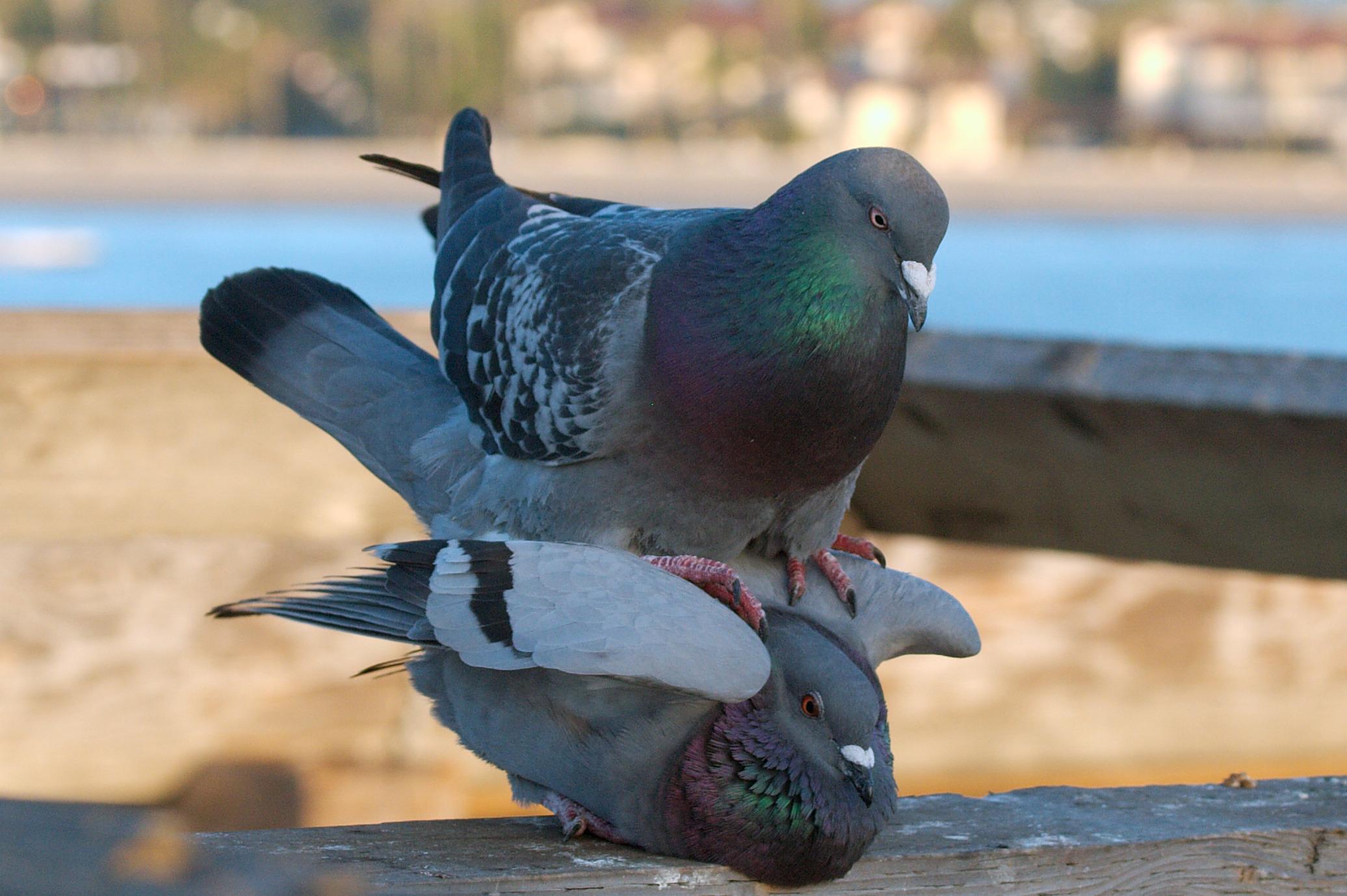 foto-golubi-porno-eroticheskoe-video-nasti-ariel