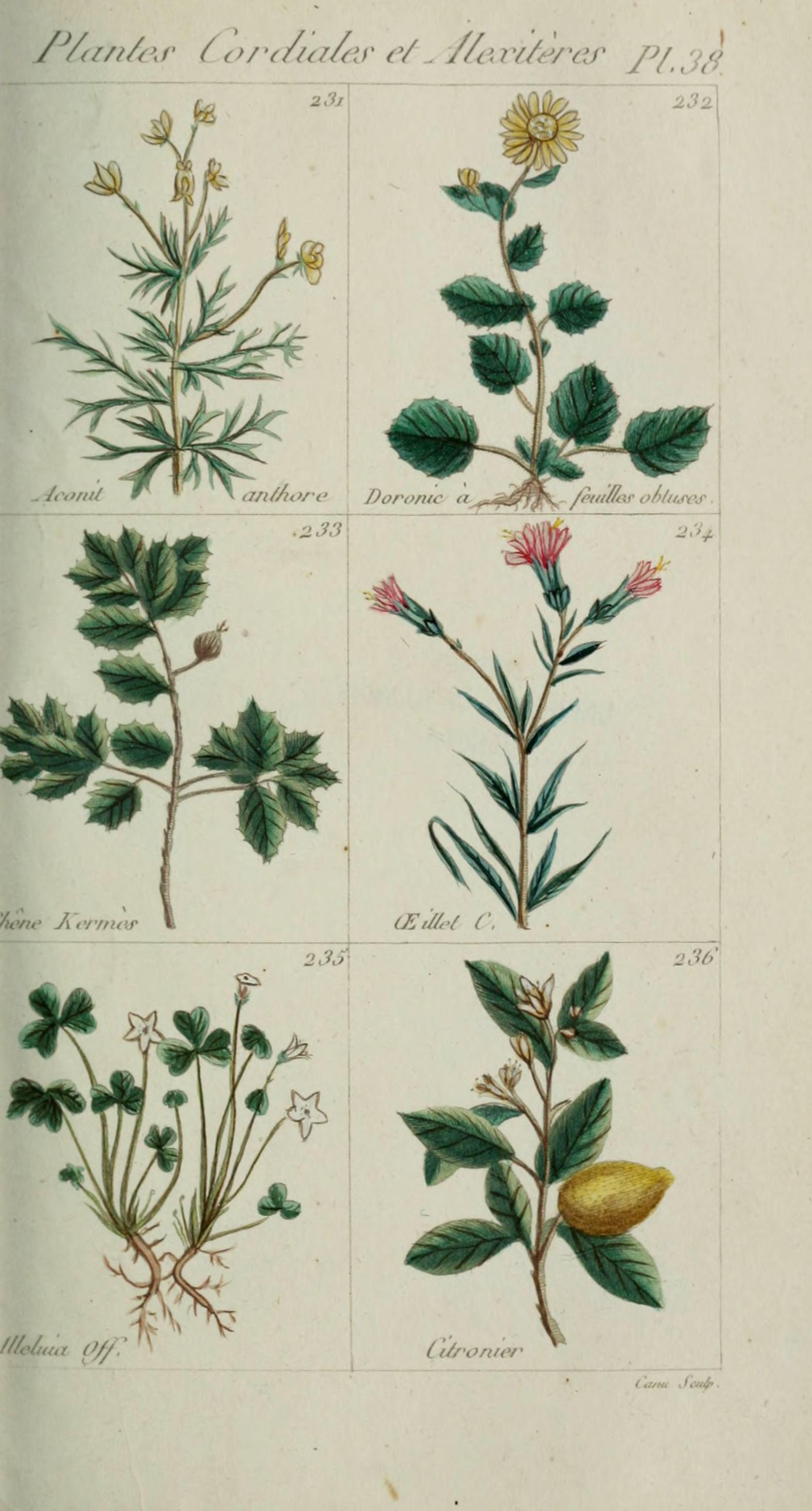 File plantes usuelles indig nes et exotiques pl 38 for Plante exotique