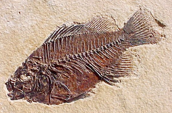 c14 dating fossils