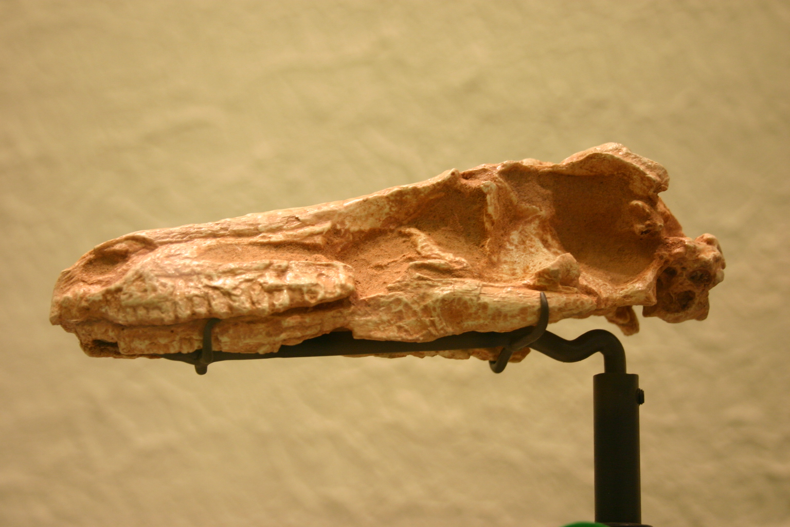 Saurornithoides mongoliensis.jpg