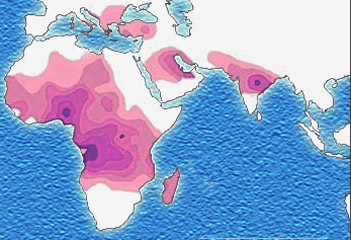 Image: Sickle cell distribution