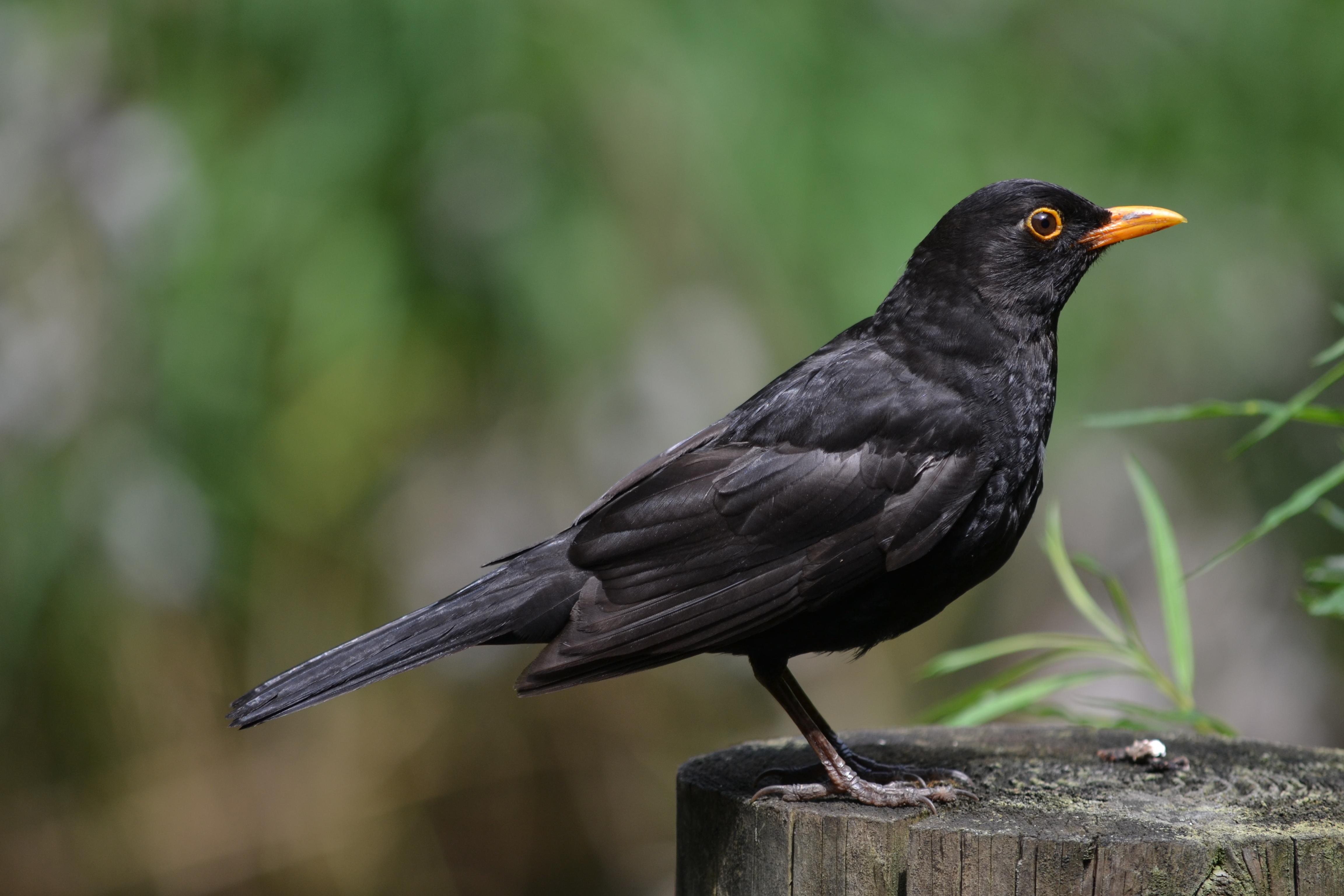 Best Bird Canary Song Restaurer En France
