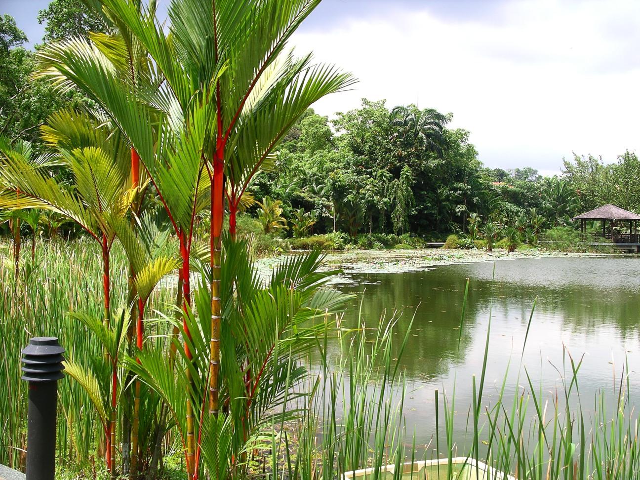 Description symphony lake singapore botanic gardens 20041025 jpg