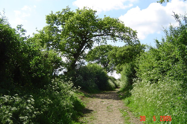 The Icknield Way in Spring - geograph.org.uk - 72414