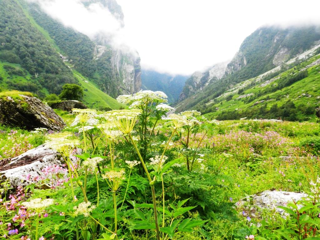 File:Valley of flowers(UNESCO world heritage site).jpg ...