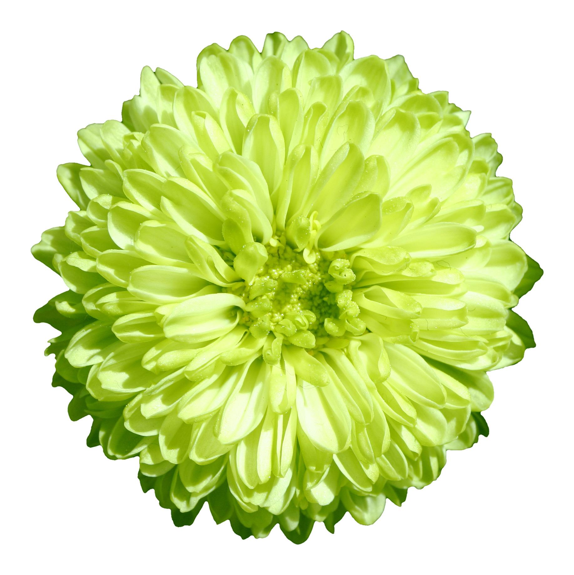 File Flower 14 G Wikimedia Commons