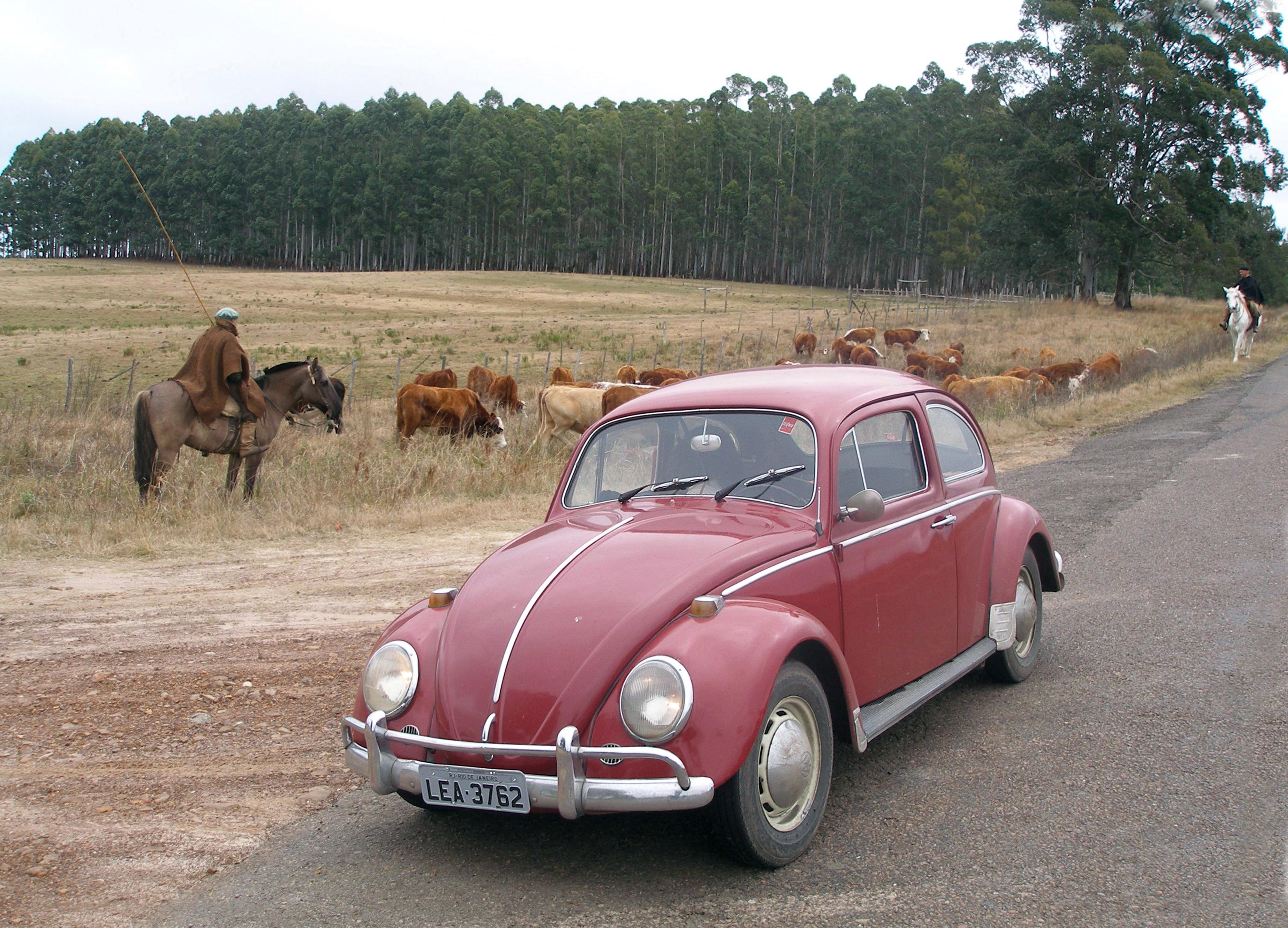 File 1969 Volkswagen 1300 Jpg Wikimedia Commons