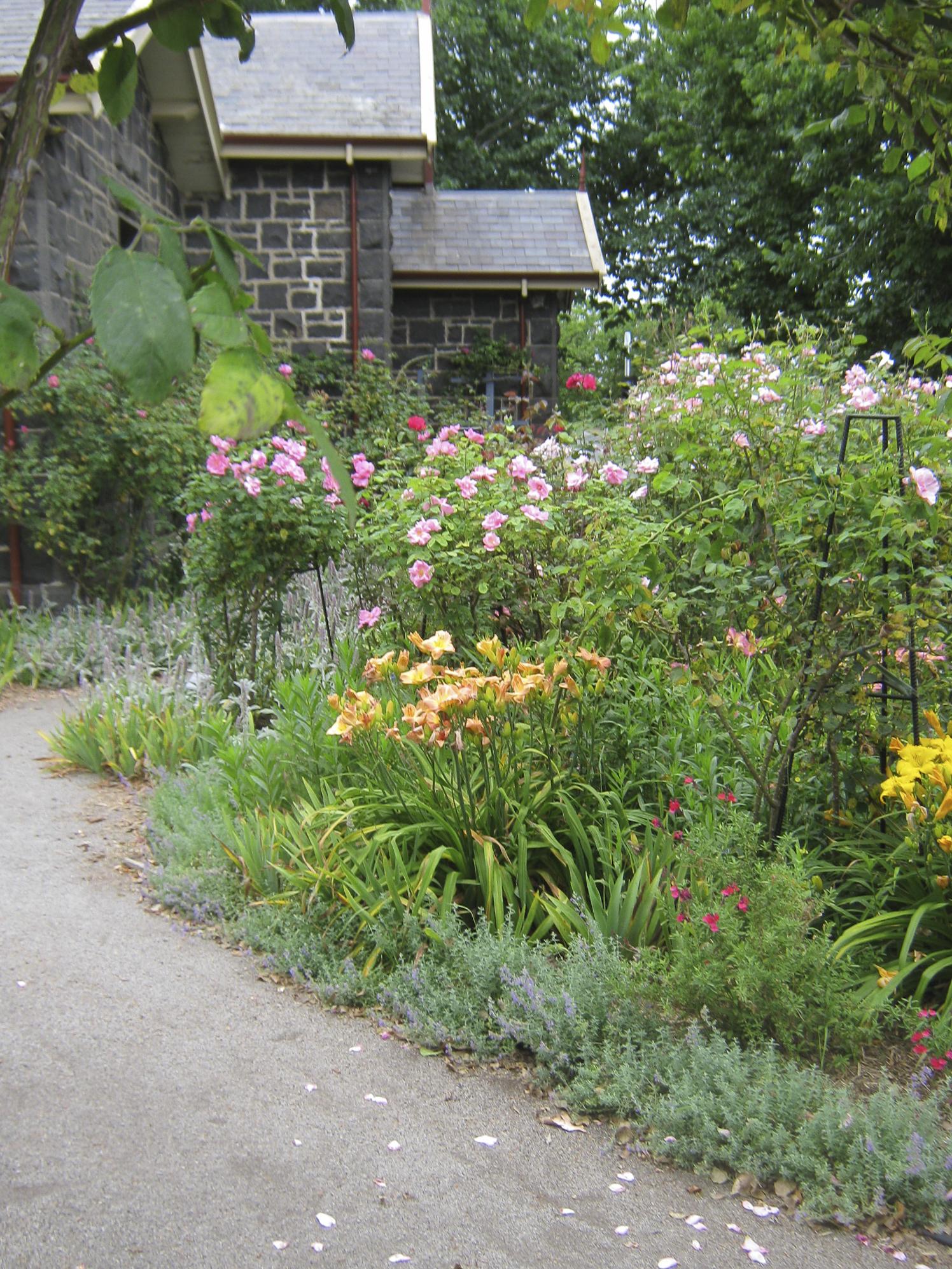 Roses In Garden: Alister Clark Memorial Rose Garden