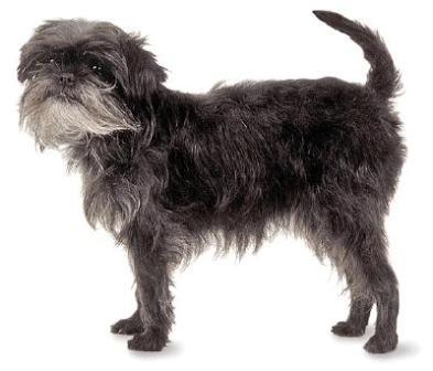 Image Result For Royal Canin Dog