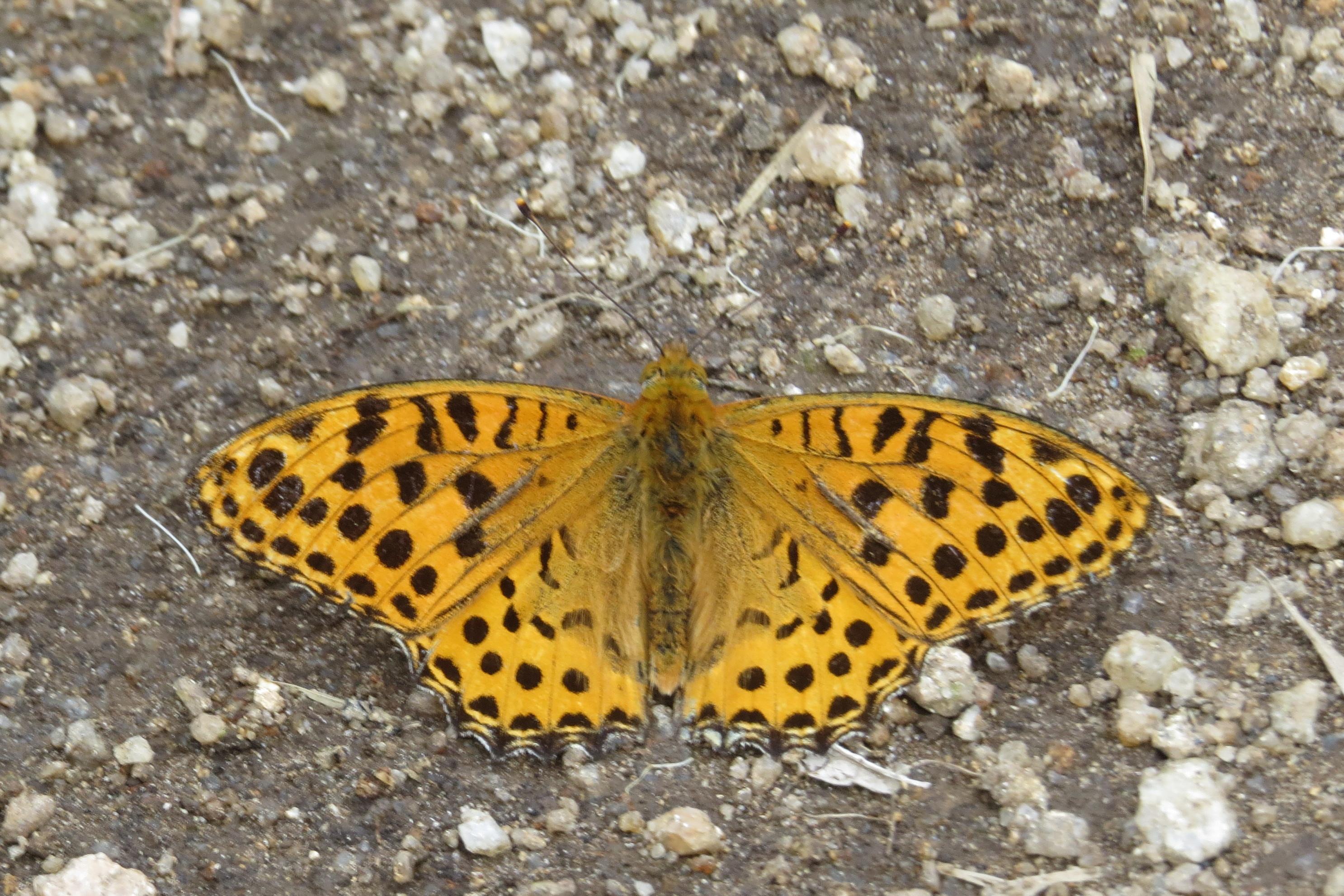 butterfly 1982 cast