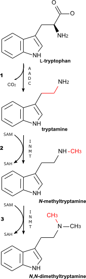 DMT biosynthetic pathway.png